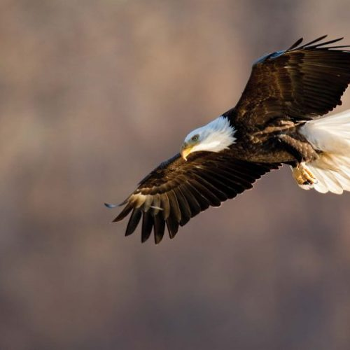 eagle mdc photo