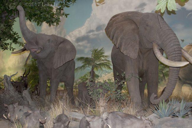 elephants WOW museum