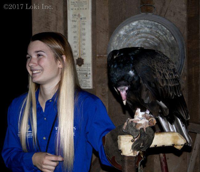 turkey vulture live wow museum