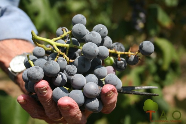 Missouri's concord grapes