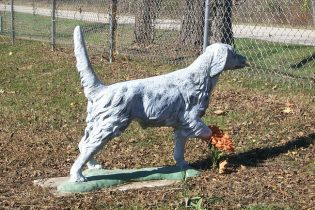 bird dog in Missouri cemetery