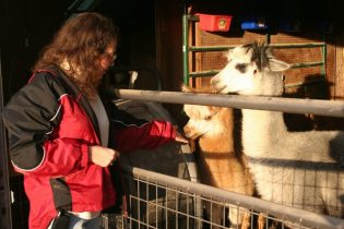 Connie Root and Ozarks Alpacas