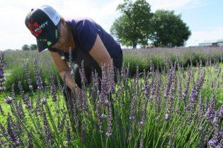 swank lavender seymour mo