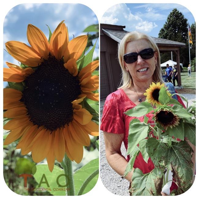 Sunflower Festival Fair Grove MO