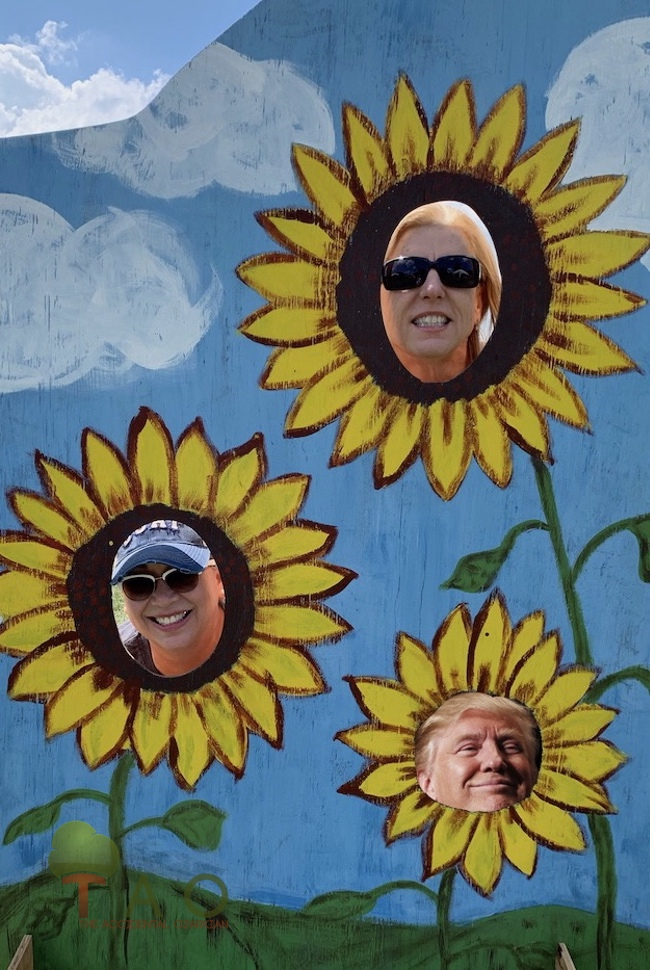 Donald Trump sunflower