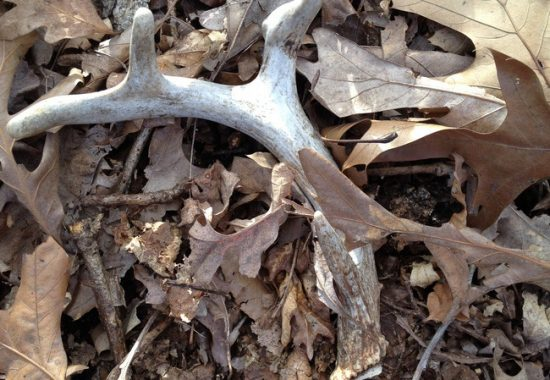 Shed Hunting in the Ozarks