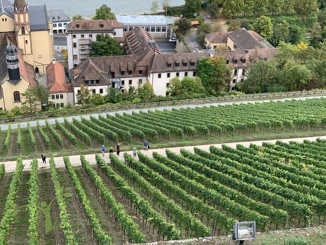 vineyards Wurzburg