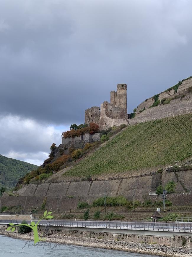 Cruising Rhein Viking River