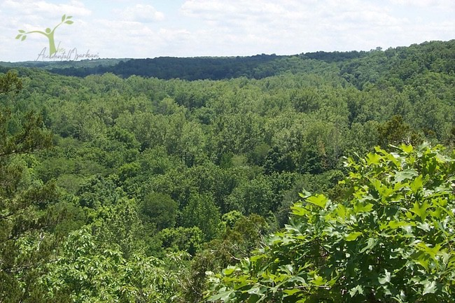 Cedar Bluff Trail view from the top